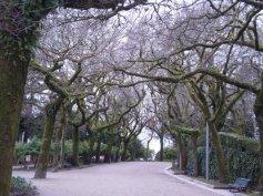 Kobra Spain Tree